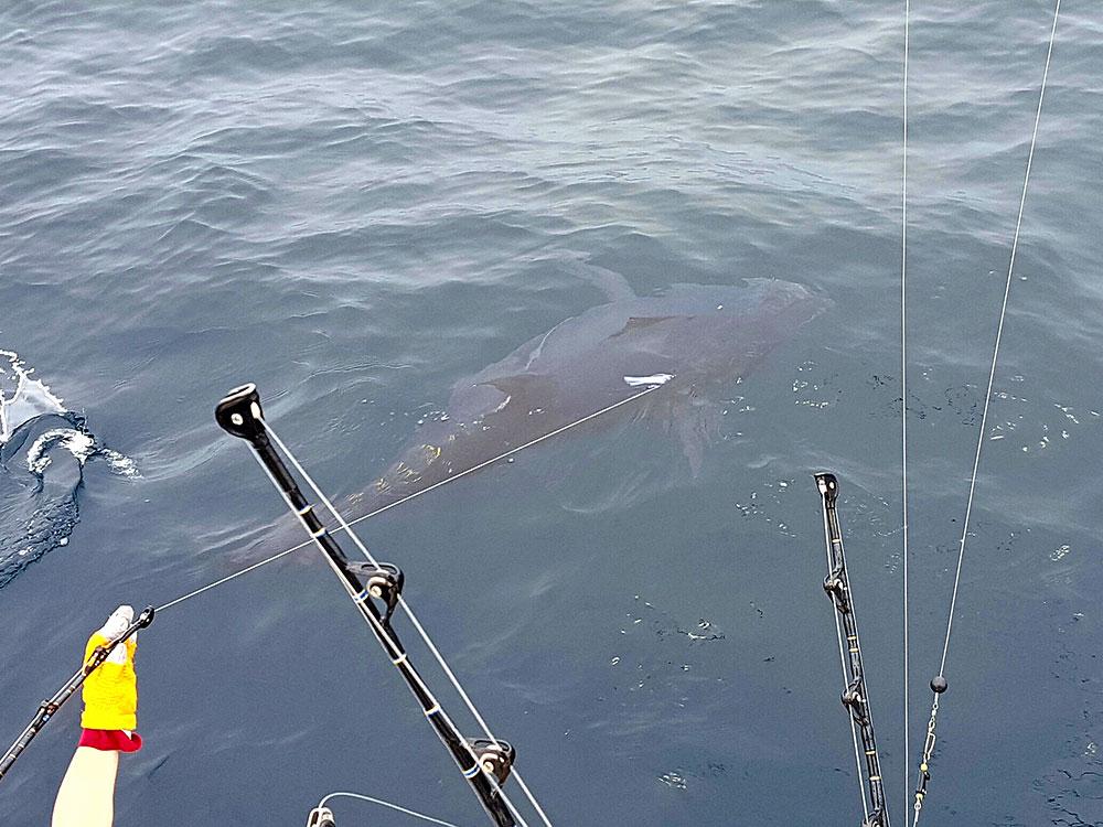 Bluefin-Tuna-fish-slideshow